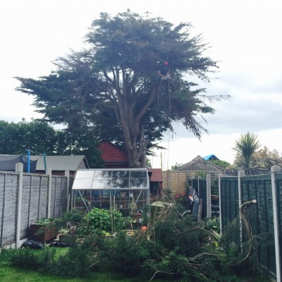 Tree Cutting Stevenage