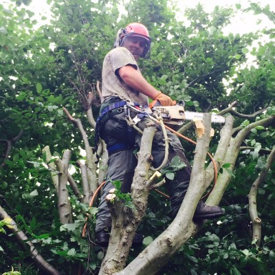 Tree Pruning Stevenage