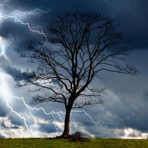 greenwood tree care