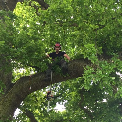Tree Surgeon Puckeridge