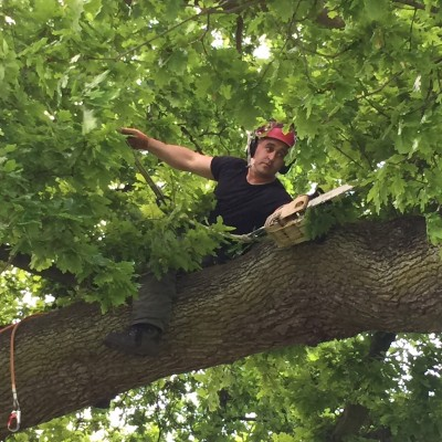 Tree Surgeon Watton-at-Stone