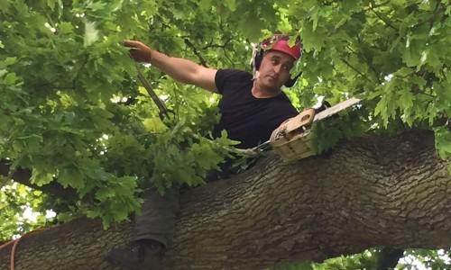Tree Surgeon Watton-at-Stone