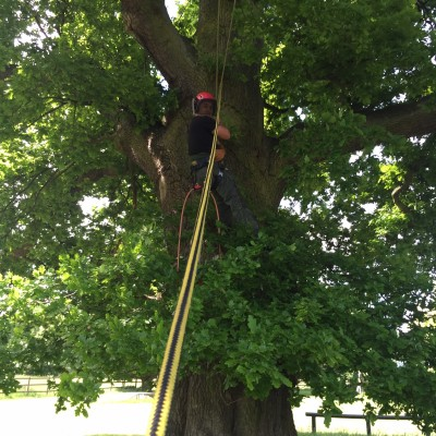 Tree Cutting Datchworth