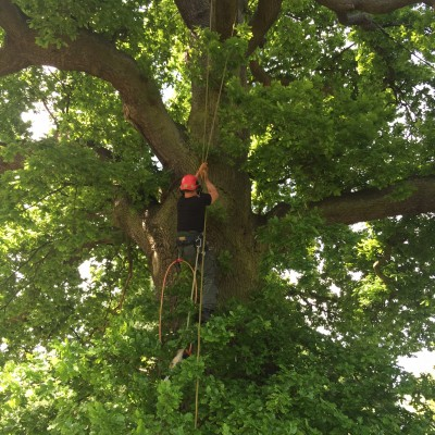 Tree Surgery Watton-at-Stone