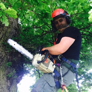 greenwood tree care