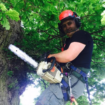 Tree Removal Hertford